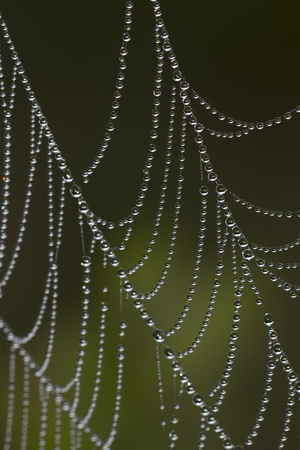 Web of an Orb Weaver Spider Photographic Print by Lynn M. Stone
