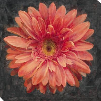 Vivid Floral 2: Gerbera Daisy Stretched Canvas Print by  Nai