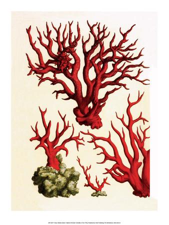 Red Coral, Cabinet of Natural Curiosities (1734-1765) Posters by Albertus Seba
