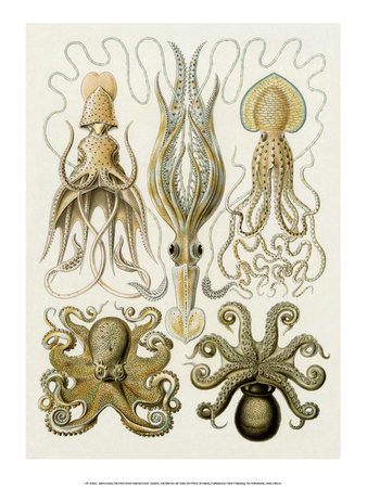 Art Forms of Nature, Gamochonia Prints by Ernst Haeckel