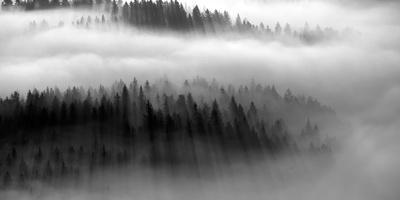 The Mist B+W Giclee Print by Bjorn Wennerwald