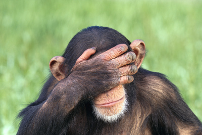 Chimpanzee Covering Eyes with Hand Photographic Print by  DLILLC