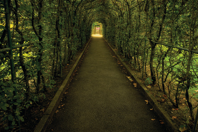 Tunnel of Shrub II Photographic Print by Dennis Frates
