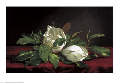 Magnolia Buds Prints by Martin Johnson Heade