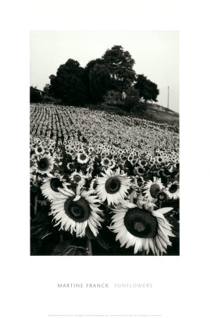 Sunflowers, Provence, France Poster by Martine Franck