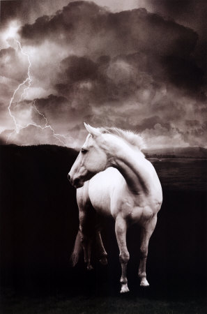 White Horse Posters