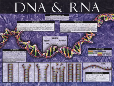 DNA & RNA Konsttryck