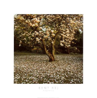 Magnolia Prints by Bent Rej