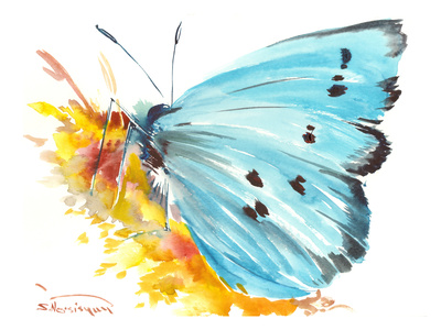 Holly Blue Butterfly 2 Posters by Suren Nersisyan