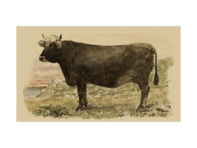 Antique Cow V Metal Print by Julian Bien