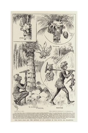 The Palm Crab and the Method of its Capture by the South Sea Islanders Giclee Print by Alexander Stuart Boyd