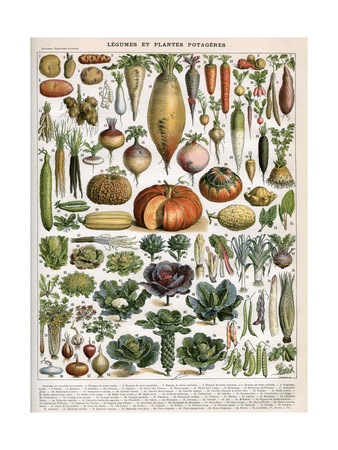 Illustration of Vegetable Varieties, C.1905-10 Giclee Print by  Alillot