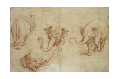 Four Studies of an Elephant Giclee Print by Giulio Romano