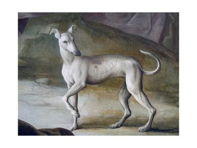 Dog Giclee Print by Jacopo Guarana