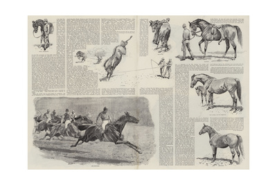The Career of a Racehorse Giclee Print by John Charlton