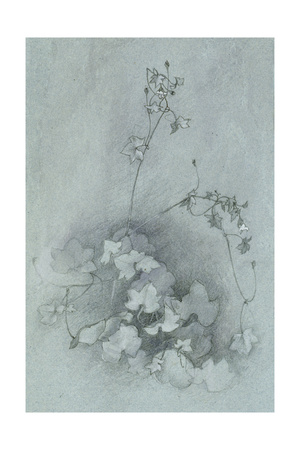 Ivy-Leaved Toadflax ('Oxford Ivy') Giclee Print by John Ruskin