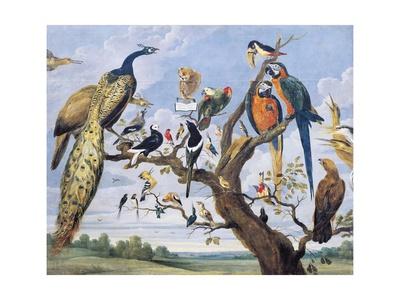 Concert of Birds, by Paul De Vos (Circa 1591-1678), Netherlands, 17th Century Giclee Print by Paul de Vos