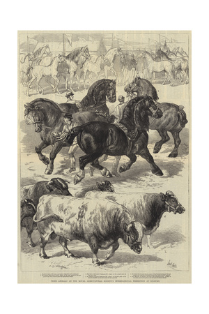 Prize Animals at the Royal Agricultural Society's International Exhibition at Kilburn Giclee Print by Samuel John Carter