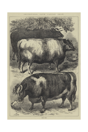 Smithfield Club Cattle Show, Prize Oxen Giclee Print by Samuel John Carter