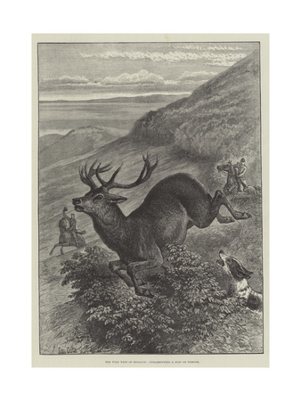 The Wild West of England, Unharbouring a Stag on Exmoor Giclee Print by Samuel John Carter