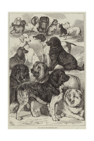 Prize Dogs at the Birmingham Show Giclee Print by Samuel John Carter