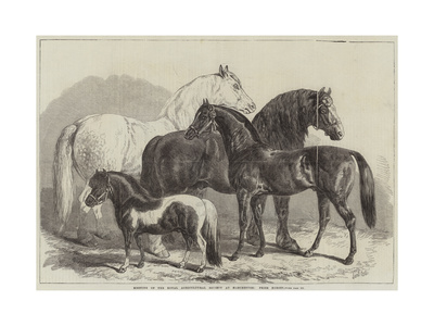 Meeting of the Royal Agricultural Society at Manchester, Prize Horses Giclee Print by Samuel John Carter
