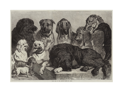 Prize Dogs at the Crystal Palace Dog Show Giclee Print by Samuel John Carter