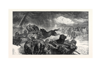 A Stampede from a Wolf, in the Exhibition of the Royal Academy 1867 Giclee Print by Samuel John Carter