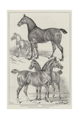 Prize Horses at the Agricultural Hall, Islington Giclee Print by Samuel John Carter