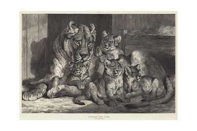 Lioness and Cubs Giclee Print by Samuel John Carter