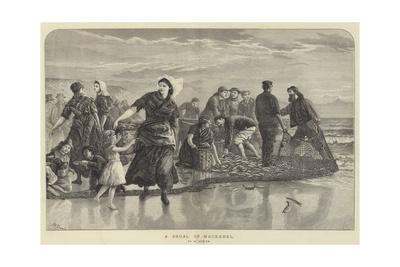 A Shoal of Mackerel Giclee Print by Walter Duncan