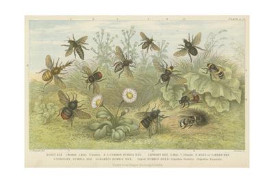 Bees Giclee Print