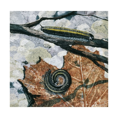 how to get rid of millipedes in home