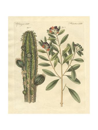 Medical Plants Giclee Print