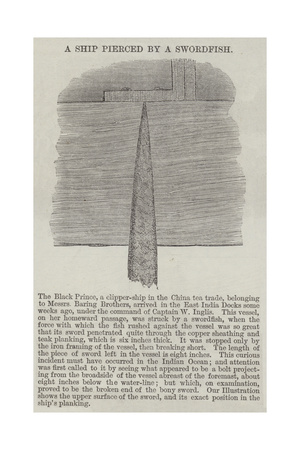 A Ship Pierced by a Swordfish Giclee Print