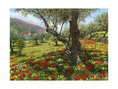 Andalucian Olive Grove Prints by Richard Harpum