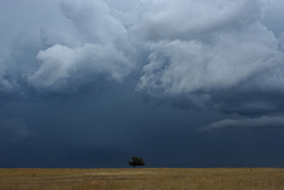 A Lone Ponderosa Pine Tree in the Prairie under Rain Clouds Photographic Print by Michael Forsberg