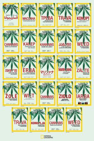 Weed around the World Prints