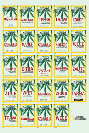 Weed around the World Posters