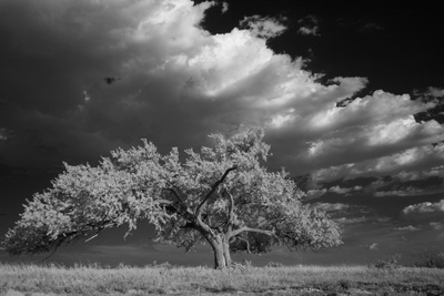 A Lone Siberian Elm Tree Sits on a Rocky Hilltop Photographic Print by Michael Forsberg