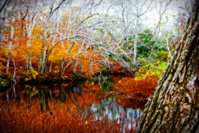 Fall Pond Colors 3 Giclee Print by Jobe Waters