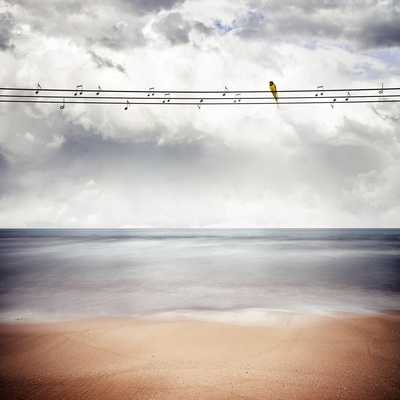 A Yellow Bird Sitting on a Wire Photographic Print by Luis Beltran