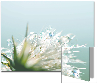 Water Droplets on Flower Art by Laura Evans