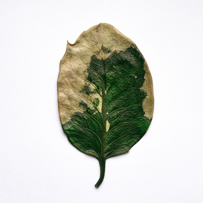 Decaying Leaf Photographic Print by Clive Nolan
