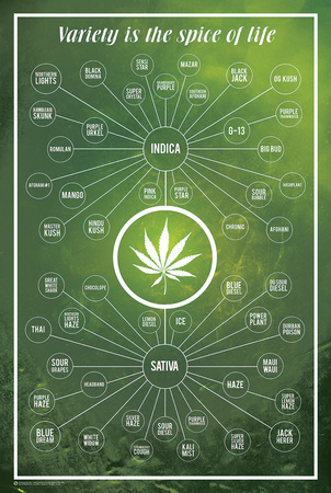 Cannabis- Variety Is The Spice Of Life Prints