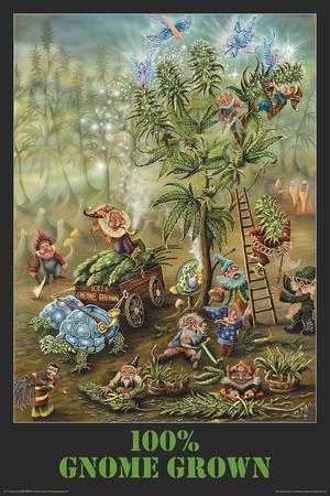 Gnome Grown Bilder