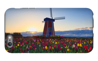 Tulip Field and Windmill iPhone 6s Plus Case by  Lantern Press