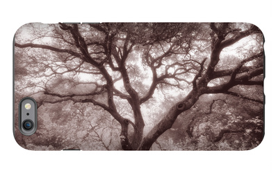 Old Oak Tree in the Oakland Hills iPhone 6s Plus Case by Vincent James