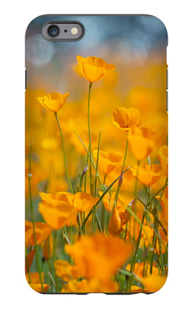 Riverside Poppies iPhone 6s Plus Case by Vincent James