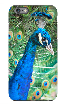 Royally Blue II iPhone 6s Plus Case by Gail Peck